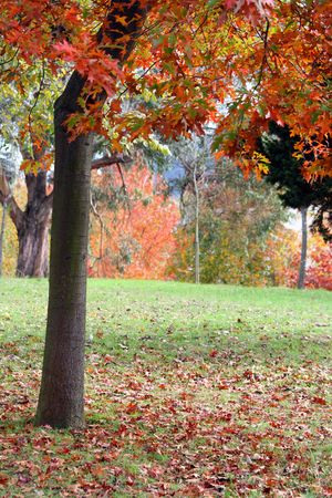 nice and cold autumn landscape Stock Photo - 4693220
