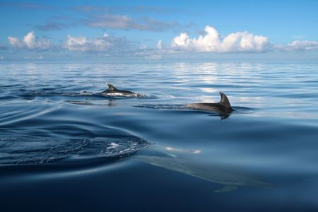 beautiful dolphins in the ocean, nature photo Stock Photo - 4881735