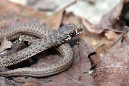 brown snake in the nature Stock Photo - 5044314