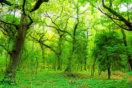beautiful light in a green and beautiful forest Stock Photo