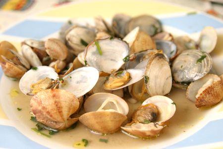beautiful and tasty clams, food photo