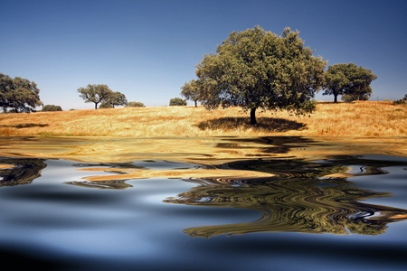 ferrous: beautiful alentejo landscape with trees and ferrous water
