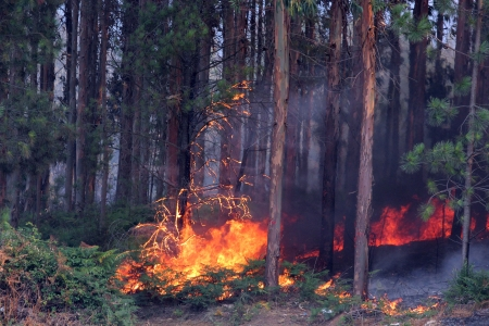 nature ash, burning forest, fireman working