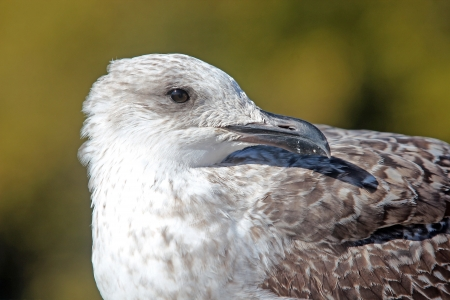 Pearched seagul by the water, nature photography, larus argentatus photo