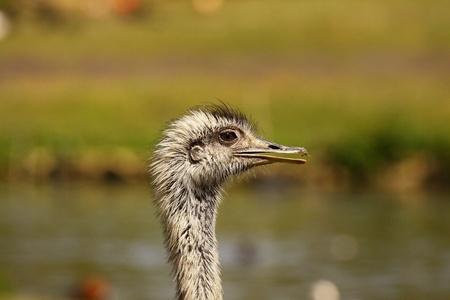 emu: La UEM
