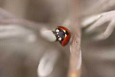 voracious: Ladybug