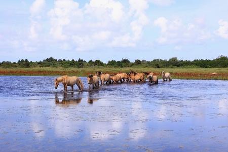 herd of horses Stock Photo - 8792556