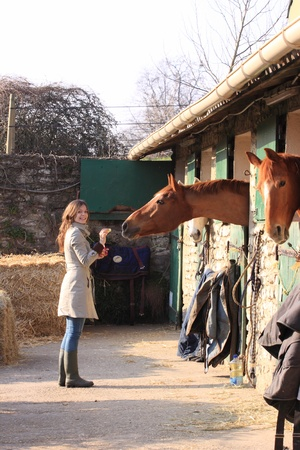 pretty young woman giving food to horses Stock Photo - 9302464