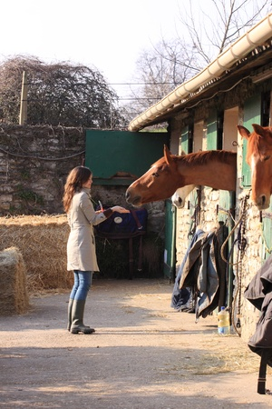 pretty young woman giving food to horses Stock Photo - 9302470