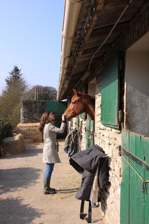 pretty young woman giving food to horses Stock Photo - 9302461