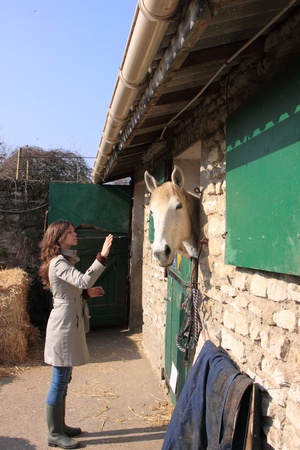 pretty young woman giving food to horses Stock Photo - 9302456
