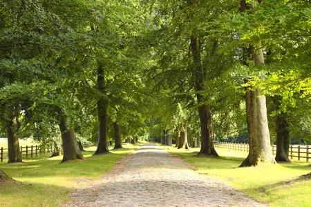 weg met bomen in het voorjaar op het platteland Stockfoto