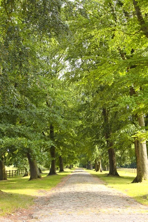 treelined: tree-lined road in the spring in the countryside