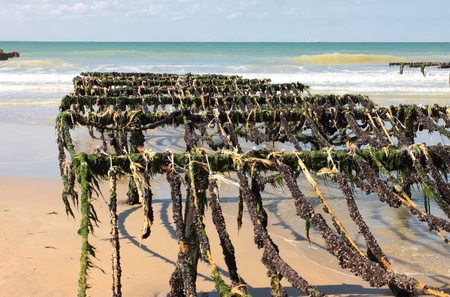 mussel farming on the coast of opal in the north of France Stock Photo - 11016797