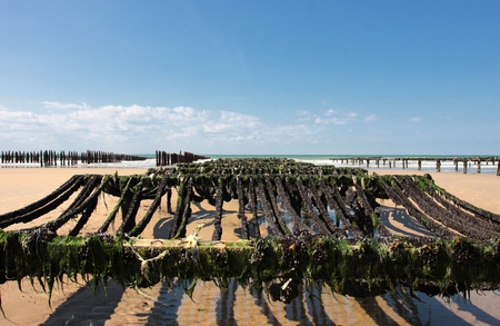 mussel farming on the coast of opal in the north of France Stock Photo - 11016785