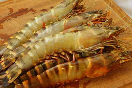 big fresh tiger prawns, king prawns, shrimp photo