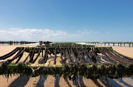 mussel farming on the coast of opal in the north of France Stock Photo - 11017116