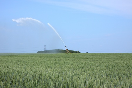 watering of wheat fields in summer Stock Photo - 13227939