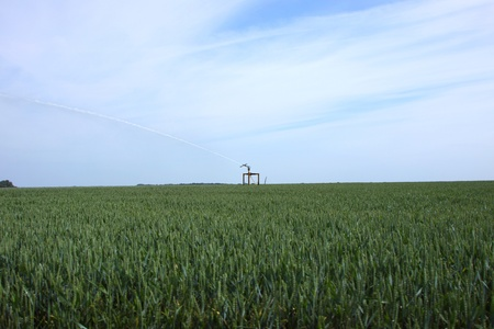 watering of wheat fields in summer photo