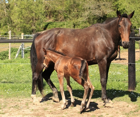 young foal with his mother in a field in spring Stock Photo - 14217023