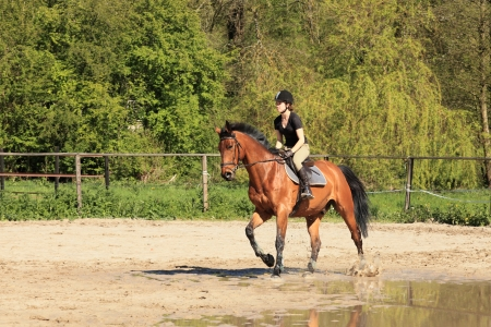 beautiful equestrienne on brown horse in summer photo