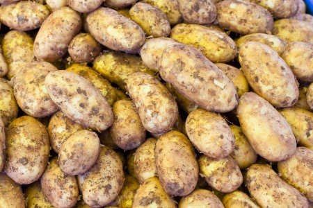 new potatoes on the market