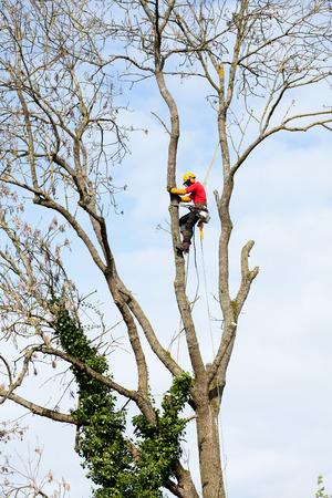Un arboriculteur de couper un arbre avec une tronçonneuse Banque d'images - 27429525