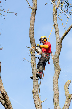 An arborist cutting a tree with a chainsaw Stock Photo - 27429529