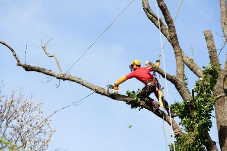 Un arboriculteur de couper un arbre avec une tronçonneuse Banque d'images - 27429532
