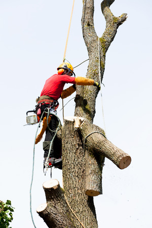 An arborist cutting a tree with a chainsaw  photo