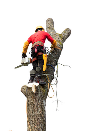Un arboriculteur de couper un arbre avec une tronçonneuse Banque d'images - 27429554