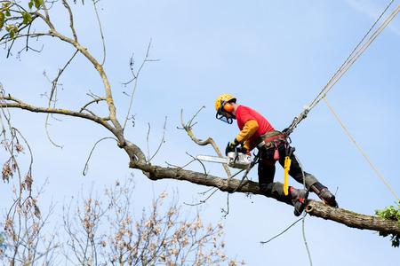 チェーンソーで木を切ってアーボリスト 写真素材