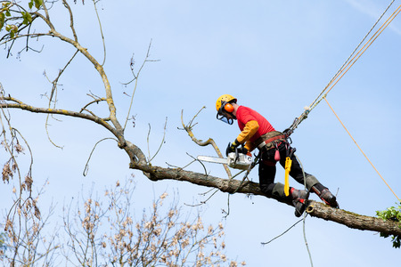 woodcutter: An arborist cutting a tree with a chainsaw