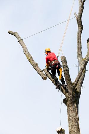 Un arboriculteur de couper un arbre avec une tronçonneuse Banque d'images - 27642500