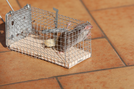 trapped mouse photo