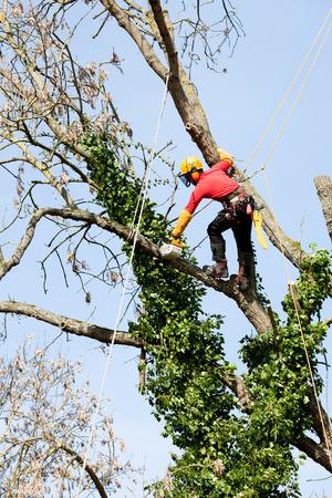 Een boomverzorger het snijden van een boom met een kettingzaag