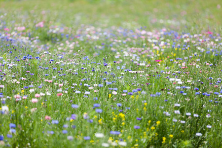 flower meadow