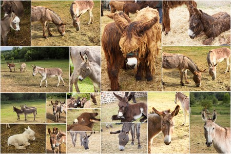 baby ass: photo collage donkeys