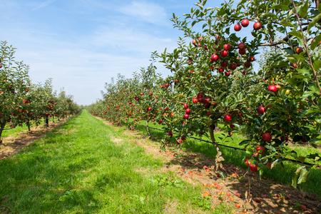 appel boomgaard