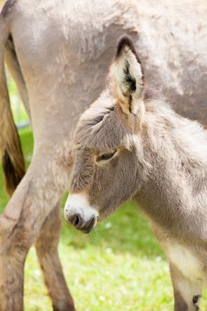 baby ass: donkey
