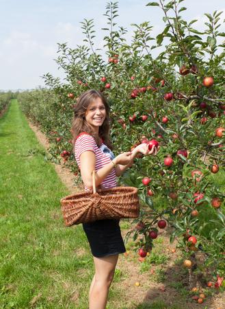 woman apple: woman apple orchard