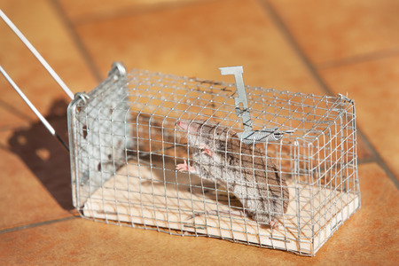 exterminate: trapped mouse