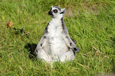 at meerkat: Meerkat Praying