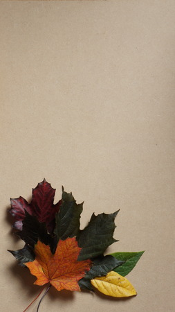 Autumn Leaves in a corner arrangement on a Wooden Grain Background 스톡 콘텐츠