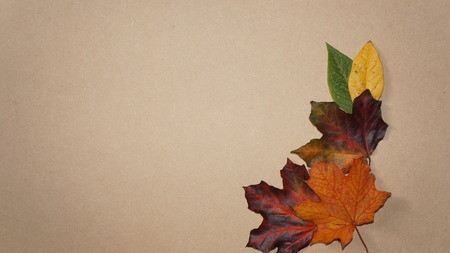 Autumn Fall Leaves on a Wooden Grain Background