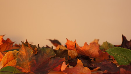 Various coloured Autumn / Fall leaves pictured against a light orange lit wall texture background. 스톡 콘텐츠