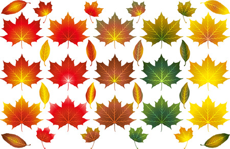 Various isolated illustrated vectors of different types and colours of Autumn leaves 일러스트