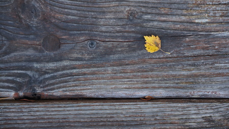 Yellow Autumn Leaf on a Wooden Grain Textured Surface 스톡 콘텐츠