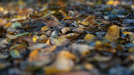 Macro shot of Brown and Yellow Autumn Dead Leaves on the Ground in a Forest 스톡 콘텐츠