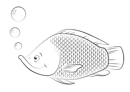 animal scale: Line drawing of swimming Saint Peters fish. Stock Photo